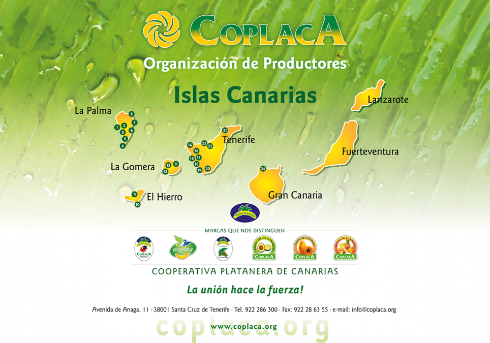 Campaña Coplaca, organización de productores